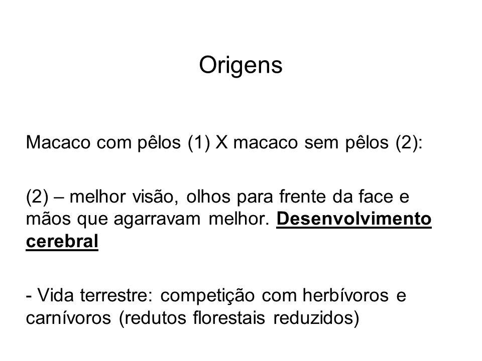 Origens Macaco com pêlos (1) X macaco sem pêlos (2): (2) – melhor visão, olhos para frente da face e mãos que agarravam melhor. Desenvolvimento cerebr