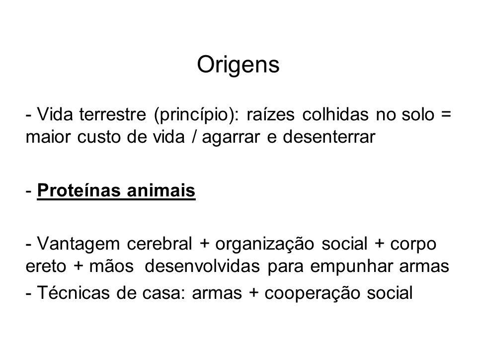 Origens - Vida terrestre (princípio): raízes colhidas no solo = maior custo de vida / agarrar e desenterrar - Proteínas animais - Vantagem cerebral +