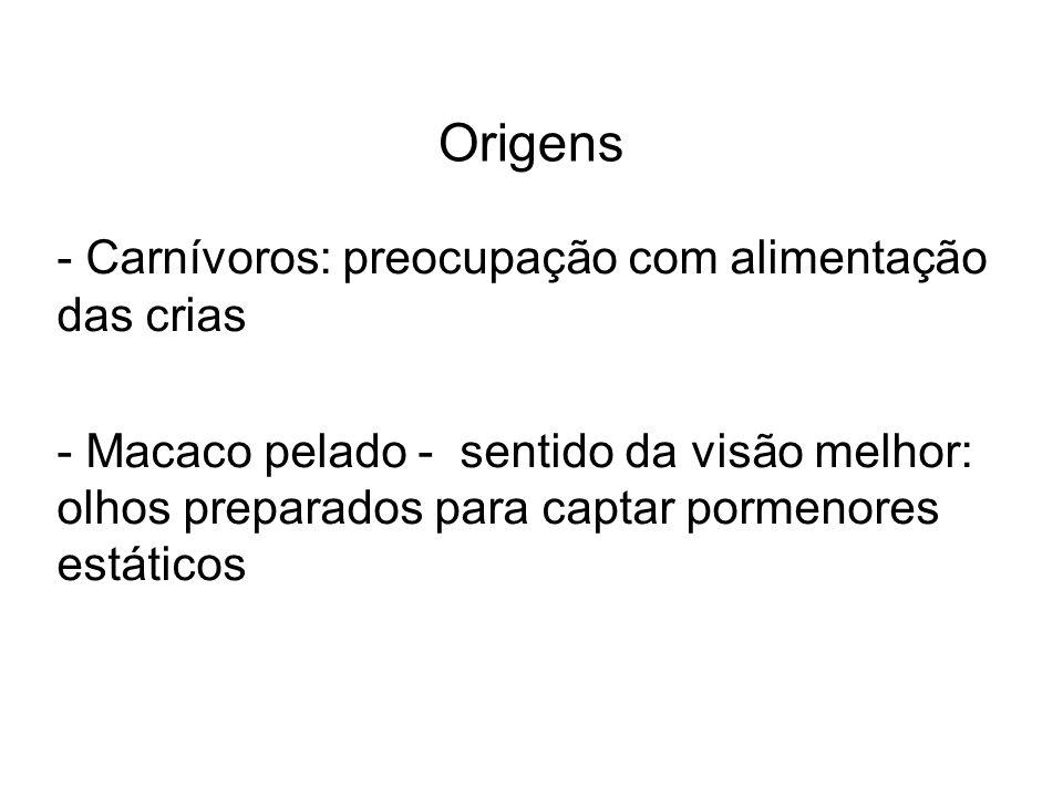 Origens - Carnívoros: preocupação com alimentação das crias - Macaco pelado - sentido da visão melhor: olhos preparados para captar pormenores estátic