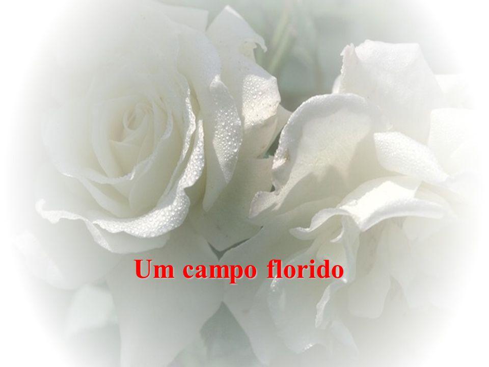 Um campo florido