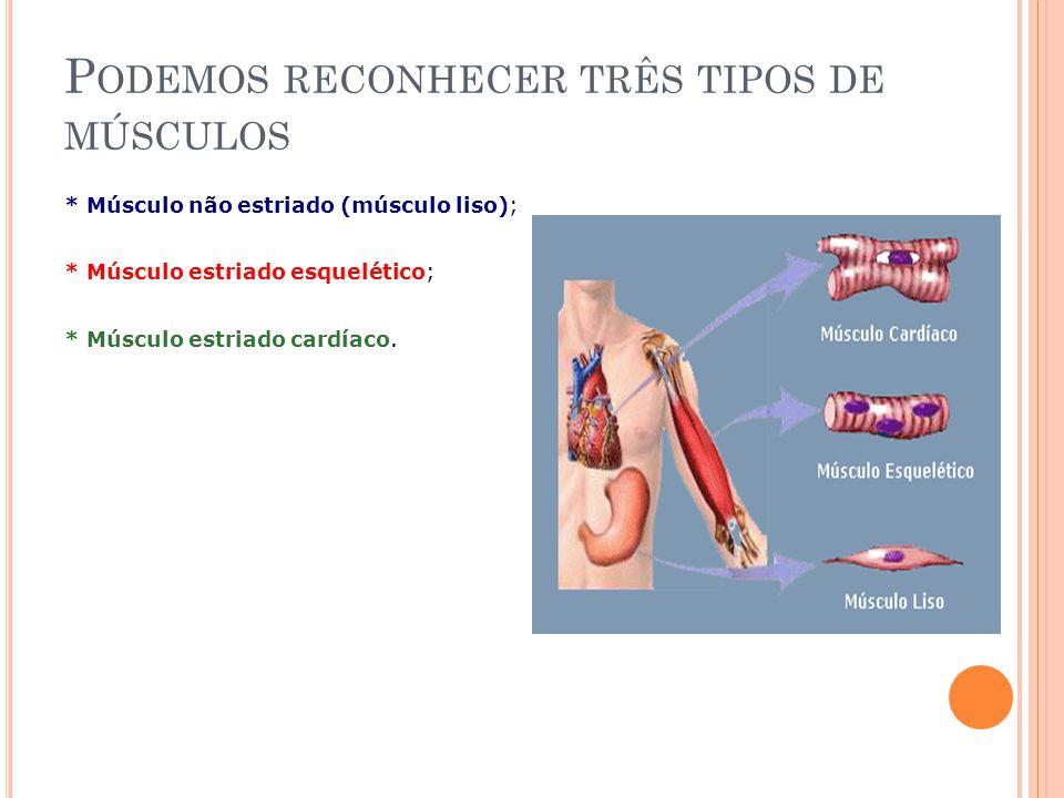 P ODEMOS RECONHECER TRÊS TIPOS DE MÚSCULOS * Músculo não estriado (músculo liso); * Músculo estriado esquelético; * Músculo estriado cardíaco.