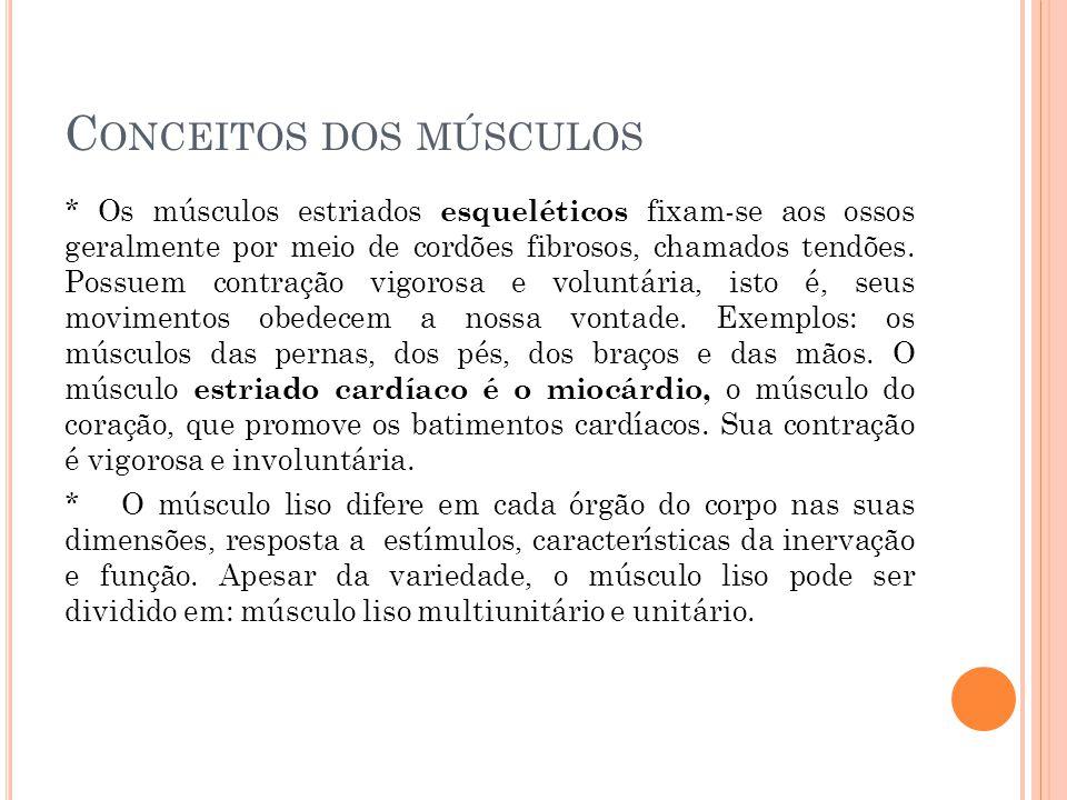 C ONCEITOS DOS MÚSCULOS * Os músculos estriados esqueléticos fixam-se aos ossos geralmente por meio de cordões fibrosos, chamados tendões. Possuem con