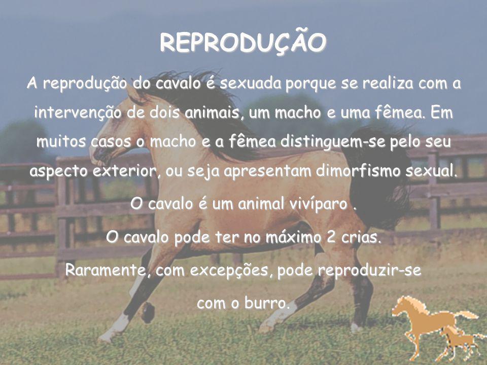 REPRODUÇÃO A reprodução do cavalo é sexuada porque se realiza com a intervenção de dois animais, um macho e uma fêmea.