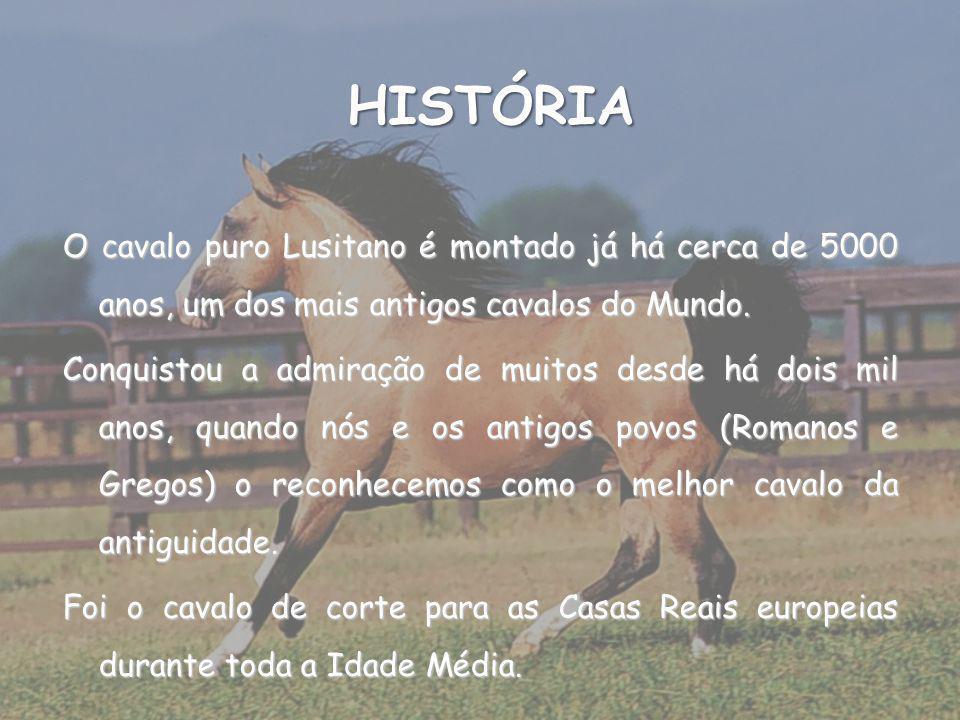 HISTÓRIA O cavalo puro Lusitano é montado já há cerca de 5000 anos, um dos mais antigos cavalos do Mundo.