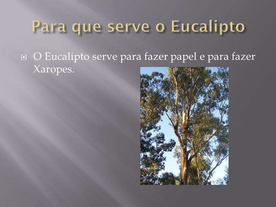  O Eucalipto é a designação vulgar das várias espécies vegetais do género Eucalyptus, ainda que o nome se aplique ainda a outros géneros de mirtáceas