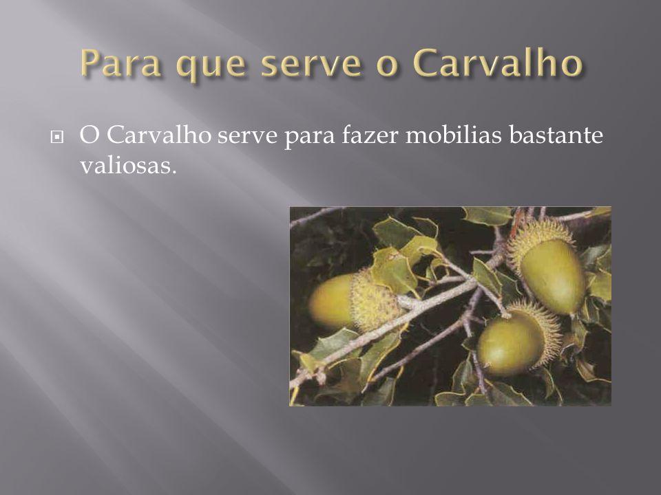  Carvalho é a designação comum de várias centenas de espécies de árvores do género Quercus da família Fagaceae, e outros géneros relacionados, nomead