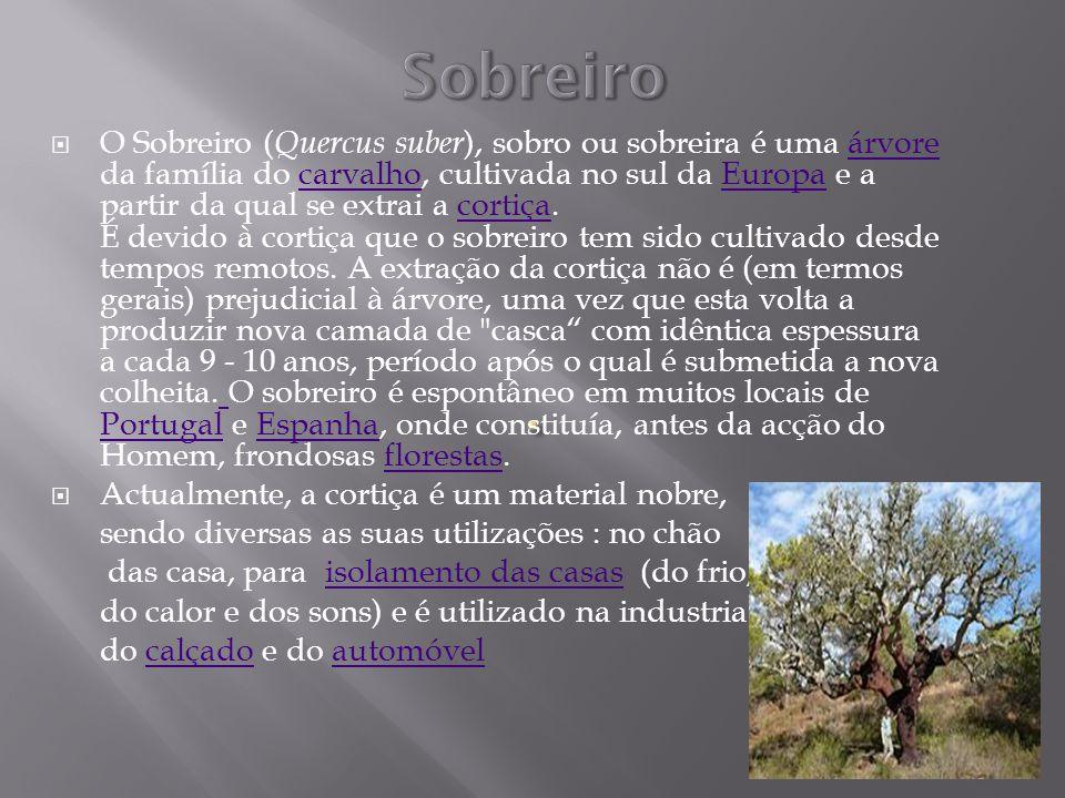 Sobreiro
