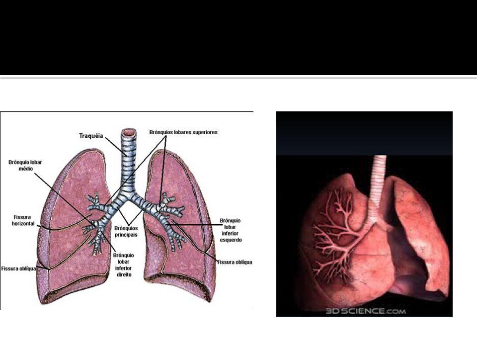  NACIF, M.S.;FREITAS, L.O.Radiologia prática: para estudante de medicina.2v.ed.