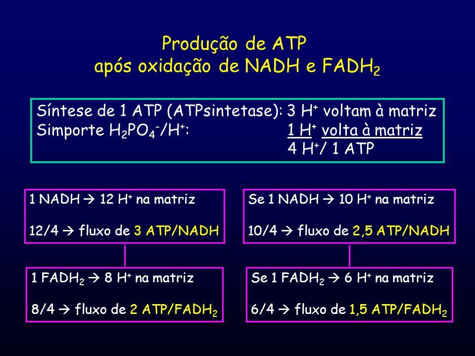 Produção de ATP após oxidação de NADH e FADH 2 Síntese de 1 ATP (ATPsintetase): 3 H + voltam à matriz Simporte H 2 PO 4 - /H + : 1 H + volta à matriz