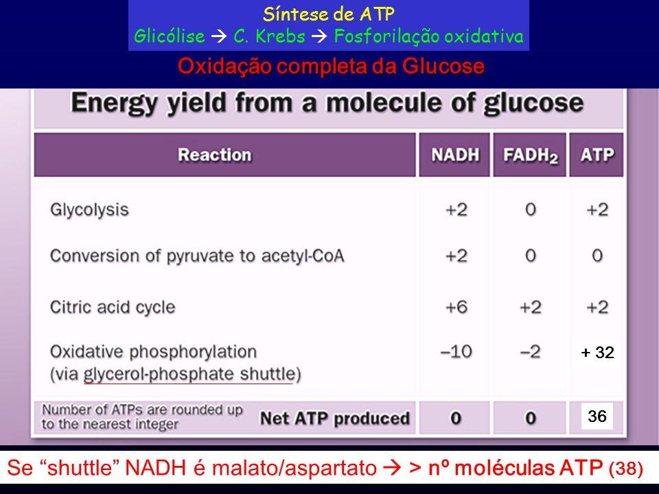 """+ 32 36 Se """"shuttle"""" NADH é malato/aspartato  > nº moléculas ATP (38) Oxidação completa da Glucose Síntese de ATP Glicólise  C. Krebs  Fosforilação"""