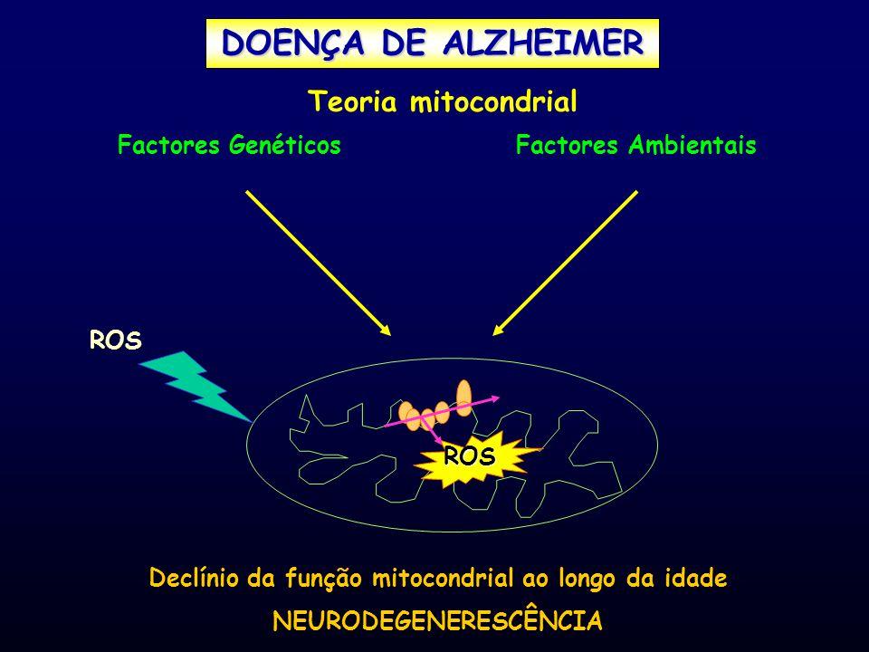 Factores GenéticosFactores Ambientais ROS ROS Declínio da função mitocondrial ao longo da idade NEURODEGENERESCÊNCIA Teoria mitocondrial DOENÇA DE ALZ