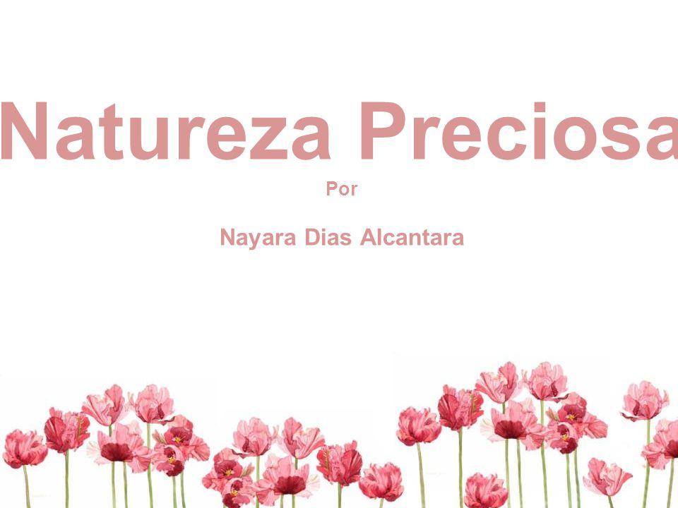 Natureza Preciosa Por Nayara Dias Alcantara