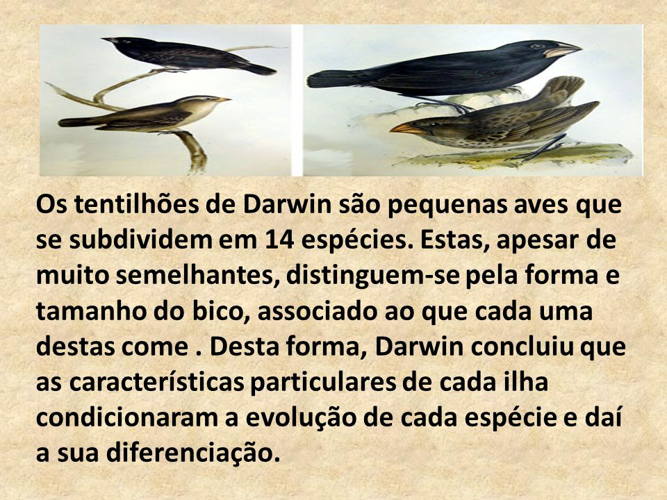 Os tentilhões de Darwin são pequenas aves que se subdividem em 14 espécies. Estas, apesar de muito semelhantes, distinguem-se pela forma e tamanho do