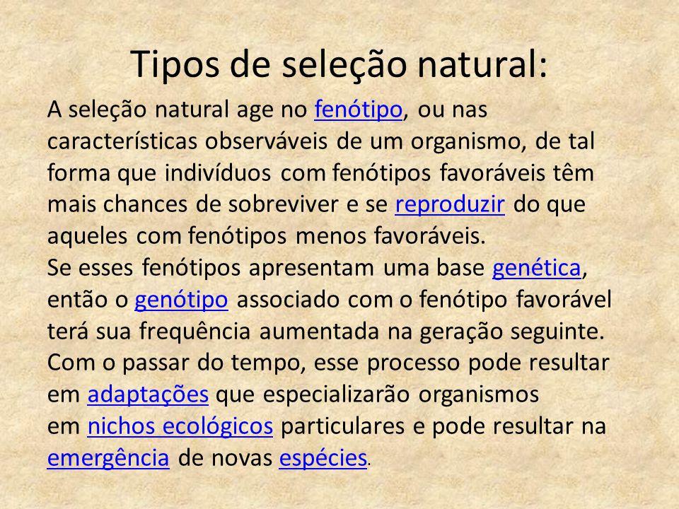 Tipos de seleção natural: A seleção natural age no fenótipo, ou nas características observáveis de um organismo, de tal forma que indivíduos com fenót
