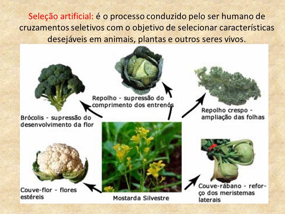 Seleção artificial: é o processo conduzido pelo ser humano de cruzamentos seletivos com o objetivo de selecionar características desejáveis em animais