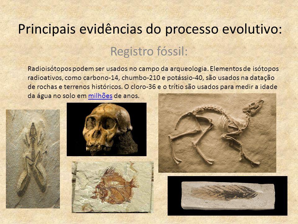 Principais evidências do processo evolutivo: Registro fóssil: Radioisótopos podem ser usados no campo da arqueologia. Elementos de isótopos radioativo