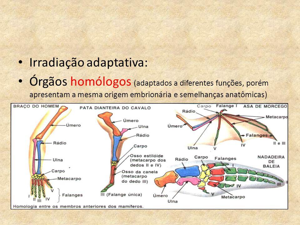 Irradiação adaptativa: Órgãos homólogos (adaptados a diferentes funções, porém apresentam a mesma origem embrionária e semelhanças anatômicas)