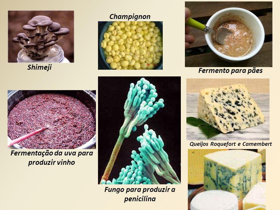 Shimeji Champignon Fermento para pães Fermentação da uva para produzir vinho Fungo para produzir a penicilina Queijos Roquefort e Camembert