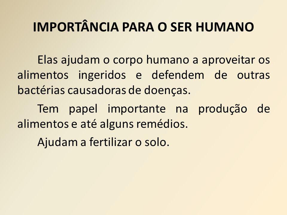 IMPORTÂNCIA PARA O SER HUMANO Elas ajudam o corpo humano a aproveitar os alimentos ingeridos e defendem de outras bactérias causadoras de doenças. Tem