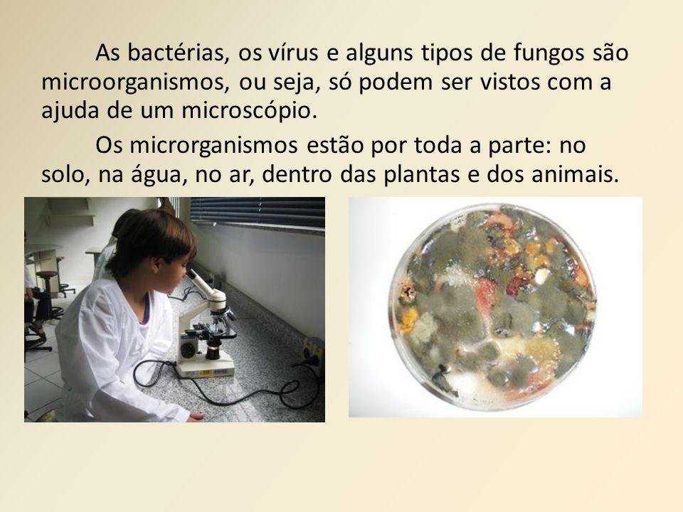 As bactérias, os vírus e alguns tipos de fungos são microorganismos, ou seja, só podem ser vistos com a ajuda de um microscópio. Os microrganismos est