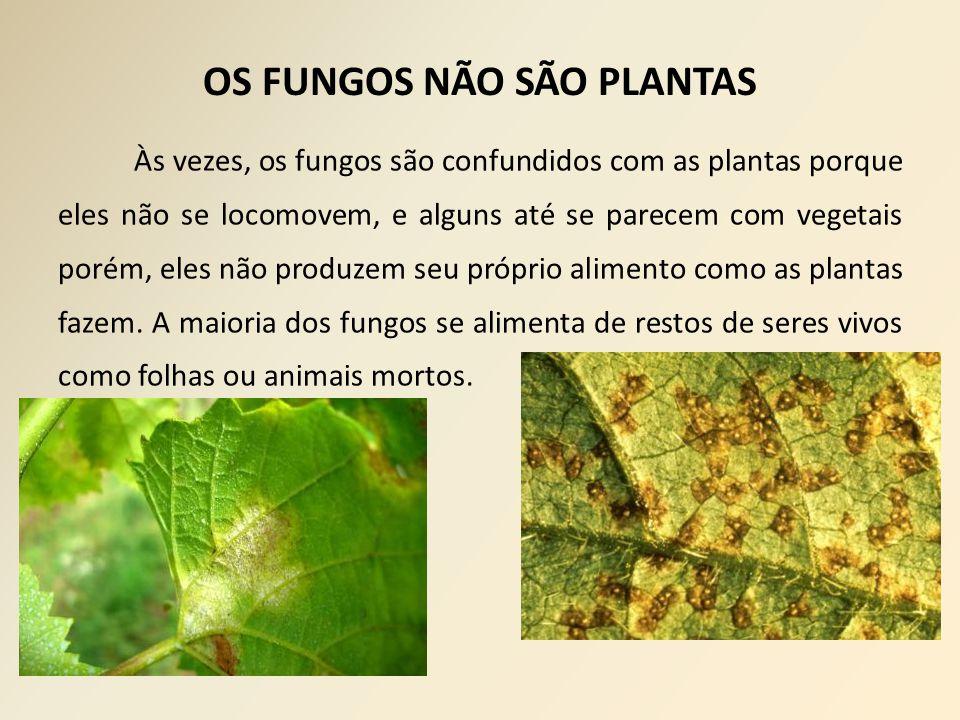 Às vezes, os fungos são confundidos com as plantas porque eles não se locomovem, e alguns até se parecem com vegetais porém, eles não produzem seu próprio alimento como as plantas fazem.