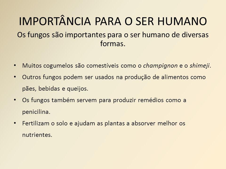 IMPORTÂNCIA PARA O SER HUMANO Os fungos são importantes para o ser humano de diversas formas.