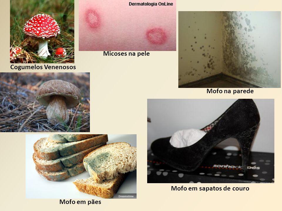 Cogumelos Venenosos Micoses na pele Mofo na parede Mofo em sapatos de couro Mofo em pães