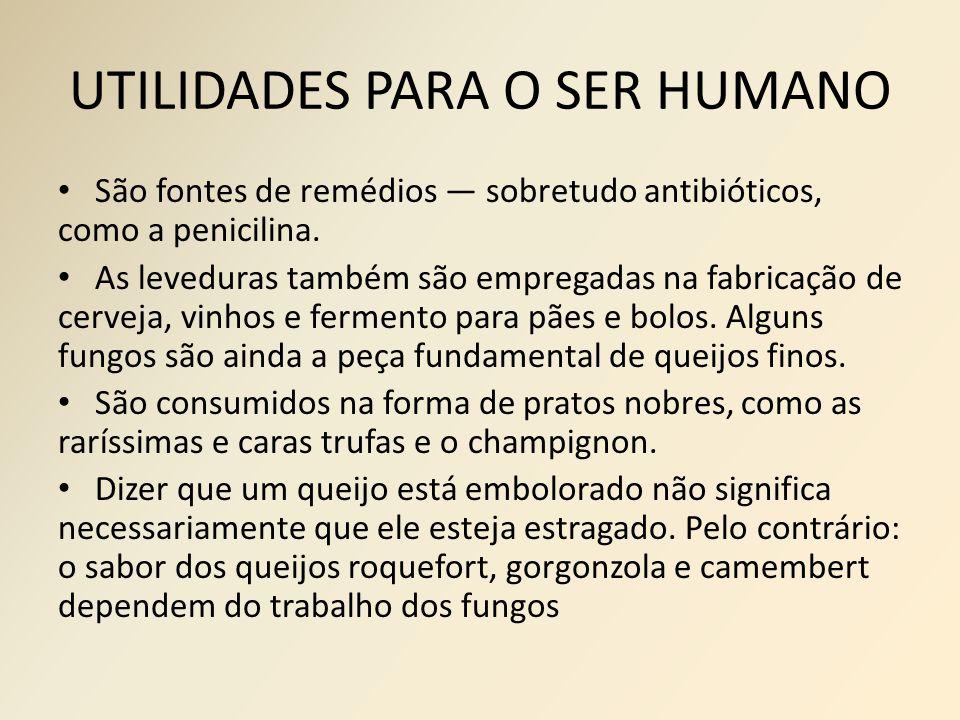 UTILIDADES PARA O SER HUMANO São fontes de remédios — sobretudo antibióticos, como a penicilina. As leveduras também são empregadas na fabricação de c