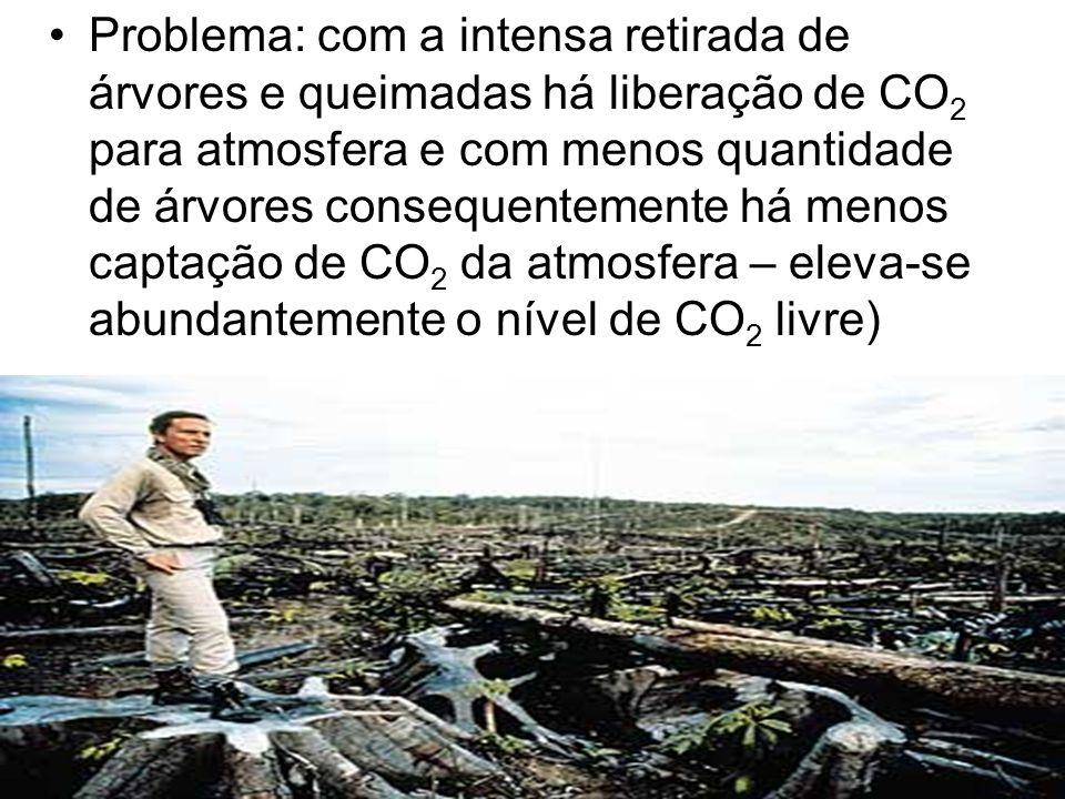 Problema: com a intensa retirada de árvores e queimadas há liberação de CO 2 para atmosfera e com menos quantidade de árvores consequentemente há meno