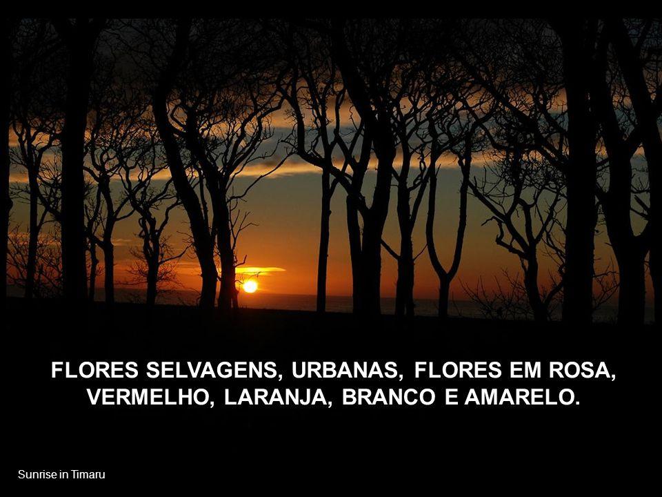 Timaru of Spring POR UM INSTANTE APENAS, LEMBRE DAS FLORES QUE BROTAM EM JANELAS, SACADAS, JARDINS E CAMPOS COLORIDOS.