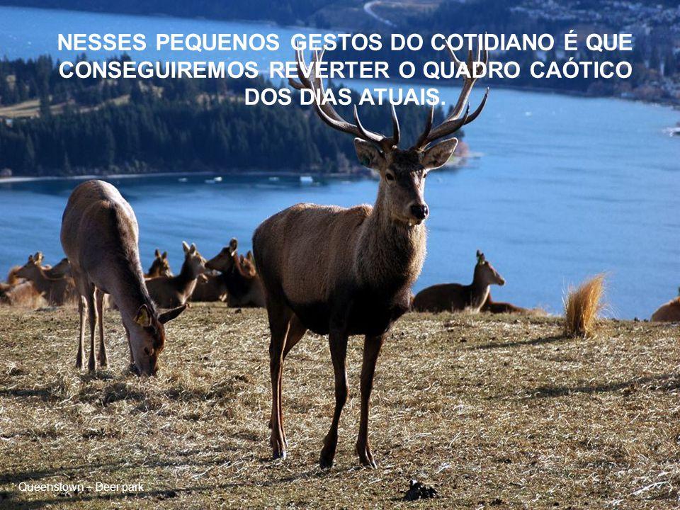 Queenstown – Deer park PENSE EM CADA GOTA DE ÁGUA FRESCA QUE SACIA A SEDE DE TANTOS SERES.