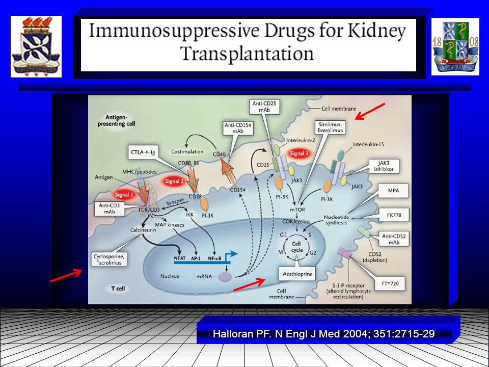 ● CiclosporinaFixa-se à ciclofilina.Inibe a calcineurin fosfatase e a ativação do Linf-T.