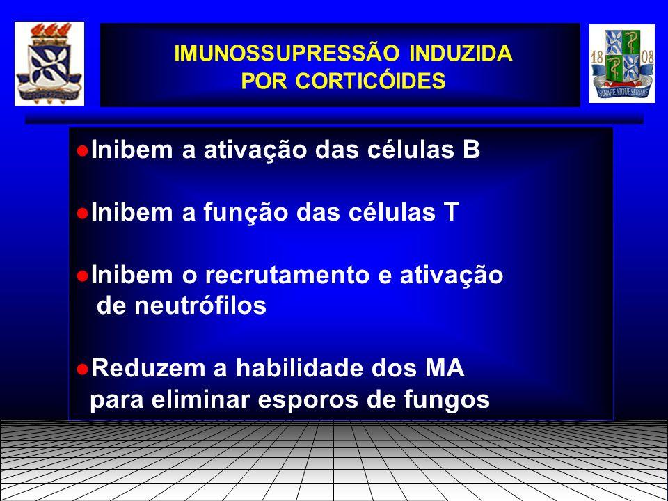 ●Inibem a ativação das células B ●Inibem a função das células T ●Inibem o recrutamento e ativação de neutrófilos ●Reduzem a habilidade dos MA para eliminar esporos de fungos IMUNOSSUPRESSÃO INDUZIDA POR CORTICÓIDES