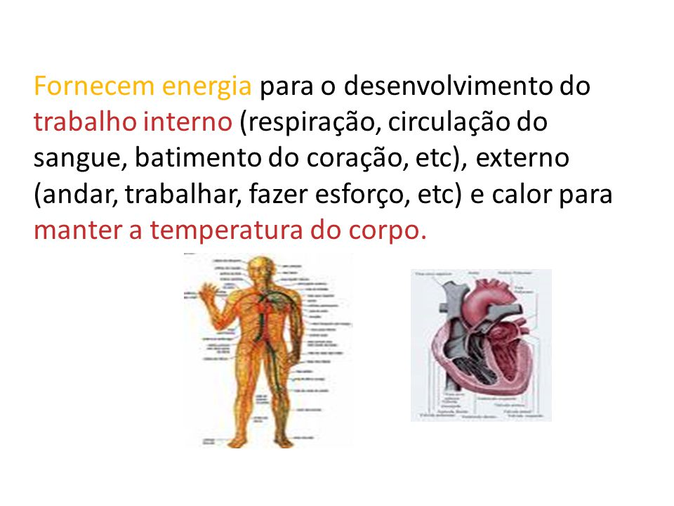 Fornecem energia para o desenvolvimento do trabalho interno (respiração, circulação do sangue, batimento do coração, etc), externo (andar, trabalhar,