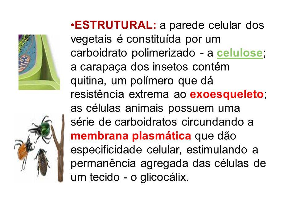 ESTRUTURAL: a parede celular dos vegetais é constituída por um carboidrato polimerizado - a celulose; a carapaça dos insetos contém quitina, um políme