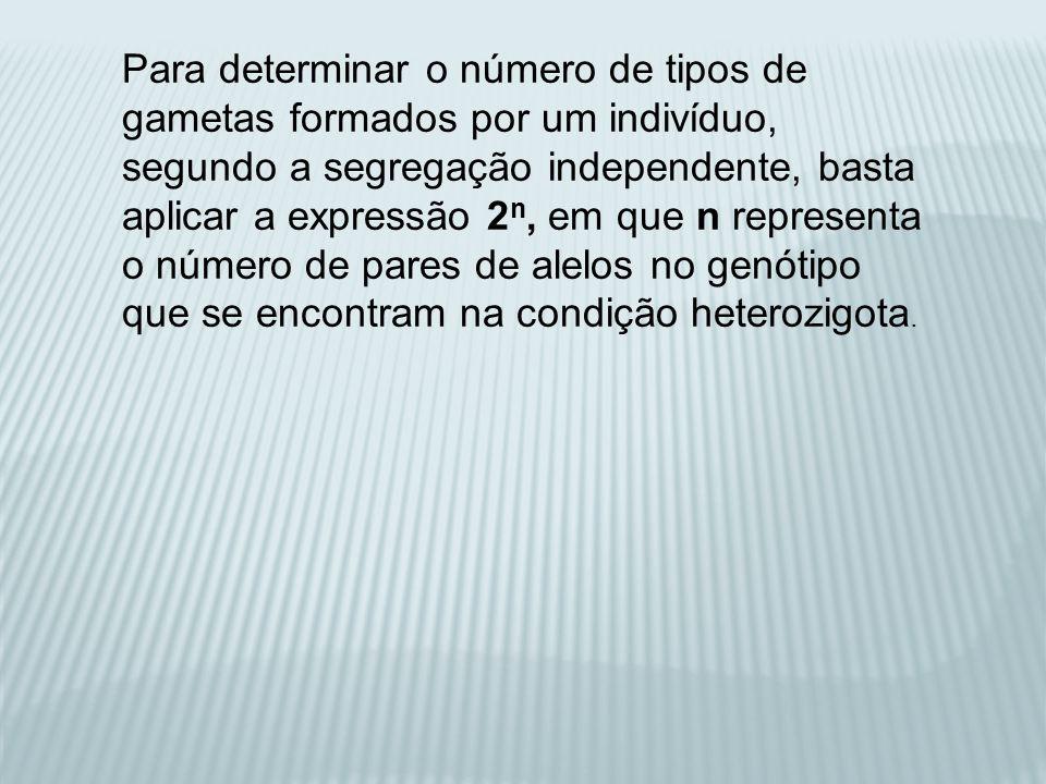 Para determinar o número de tipos de gametas formados por um indivíduo, segundo a segregação independente, basta aplicar a expressão 2 n, em que n rep