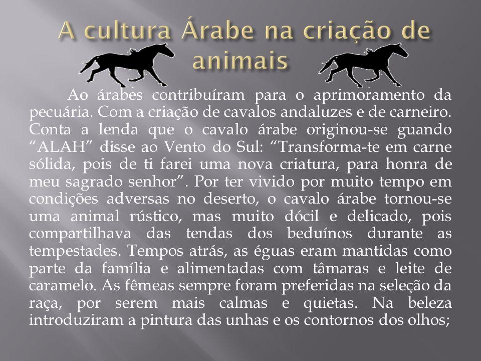 Ao árabes contribuíram para o aprimoramento da pecuária. Com a criação de cavalos andaluzes e de carneiro. Conta a lenda que o cavalo árabe originou-s