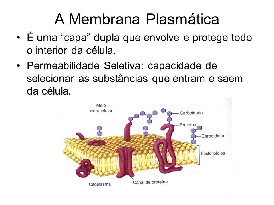 """Estruturas das células Basicamente uma célula é formada por três partes básicas: –Membrana: """"capa"""" que envolve a célula; –Citoplasma: região que fica"""