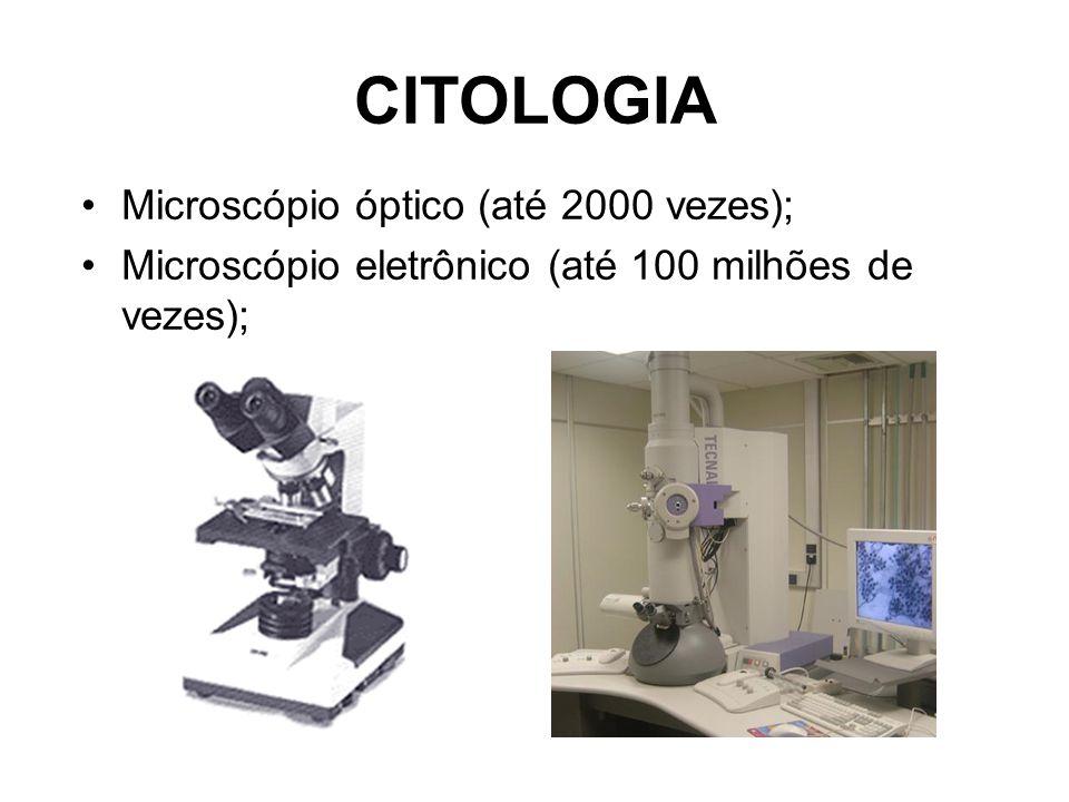 Parede celulósica É constituída pela celulose.