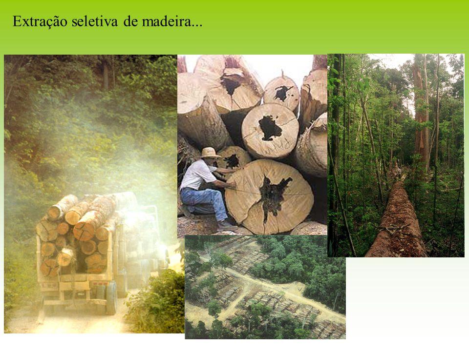 Extração seletiva de madeira...
