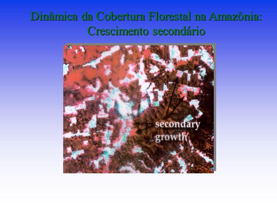 Dinâmica da Cobertura Florestal na Amazônia: Crescimento secondário