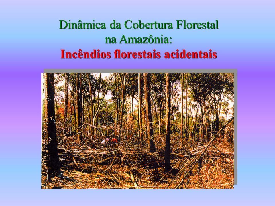 Dinâmica da Cobertura Florestal na Amazônia: Incêndios florestais acidentais