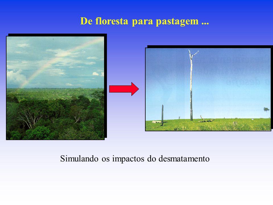 De floresta para pastagem... Simulando os impactos do desmatamento