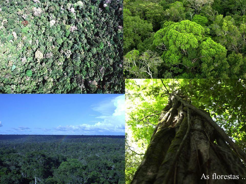 As florestas...