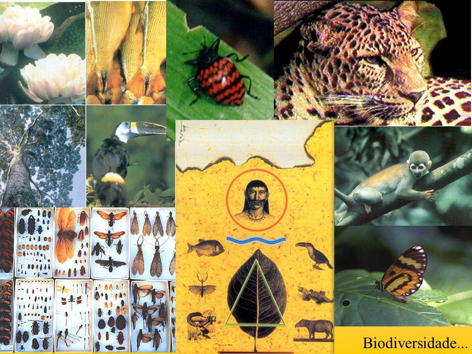 Biodiversidade...