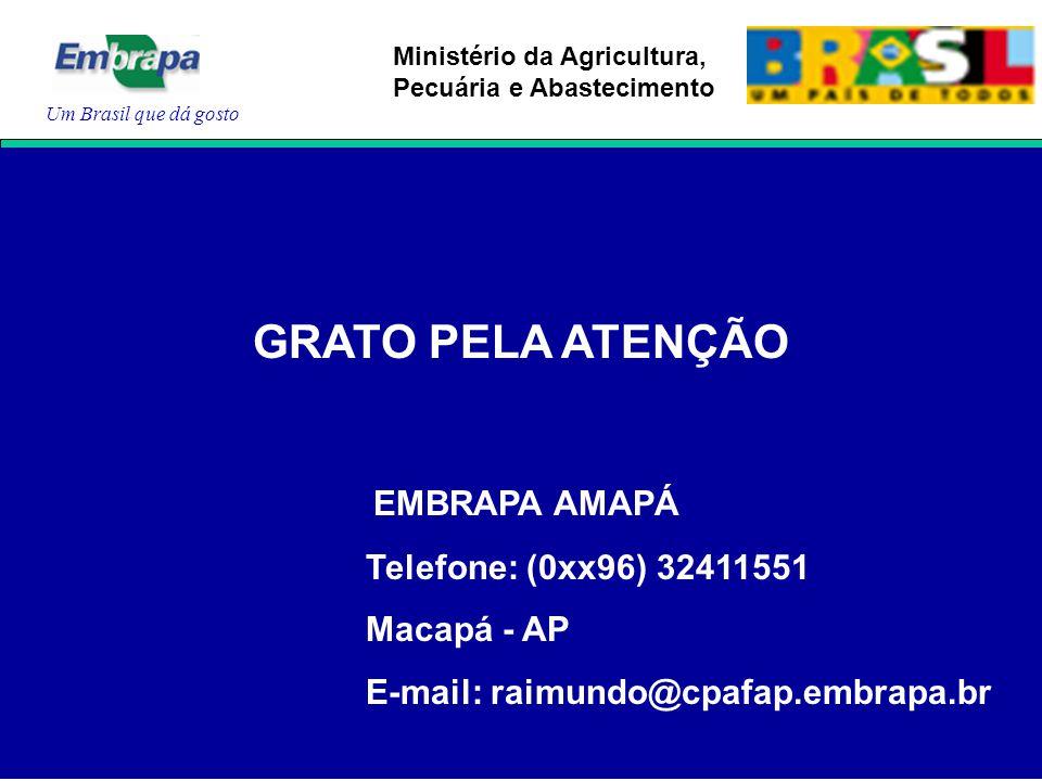 Um Brasil que dá gosto Ministério da Agricultura, Pecuária e Abastecimento GRATO PELA ATENÇÃO EMBRAPA AMAPÁ Telefone: (0xx96) 32411551 Macapá - AP E-mail: raimundo@cpafap.embrapa.br