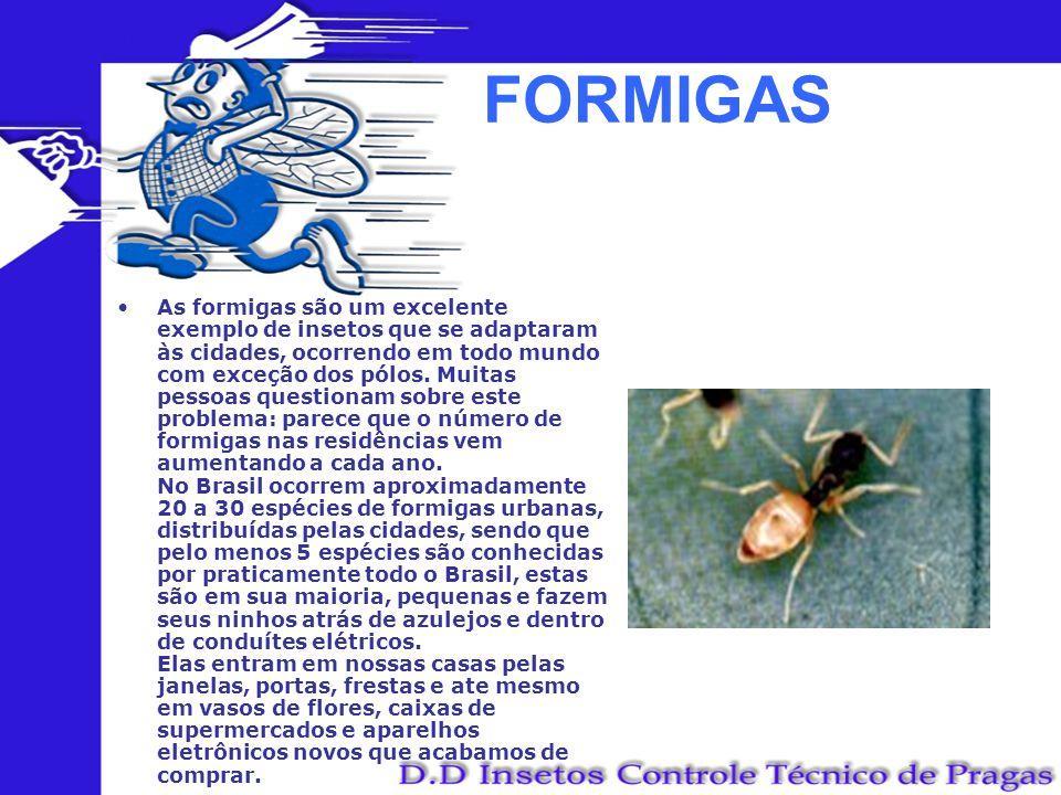 FORMIGAS As formigas são um excelente exemplo de insetos que se adaptaram às cidades, ocorrendo em todo mundo com exceção dos pólos. Muitas pessoas qu
