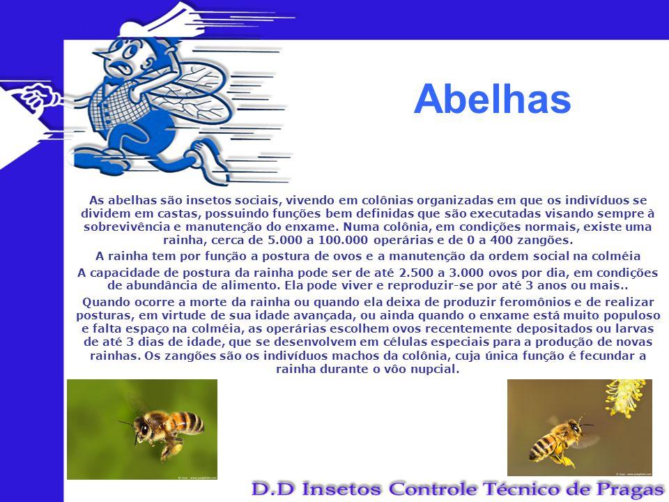 Abelhas As abelhas são insetos sociais, vivendo em colônias organizadas em que os indivíduos se dividem em castas, possuindo funções bem definidas que