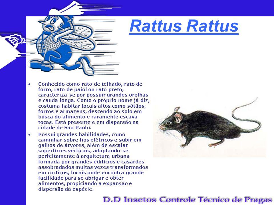 Rattus Conhecido como rato de telhado, rato de forro, rato de paiol ou rato preto, caracteriza-se por possuir grandes orelhas e cauda longa. Como o pr