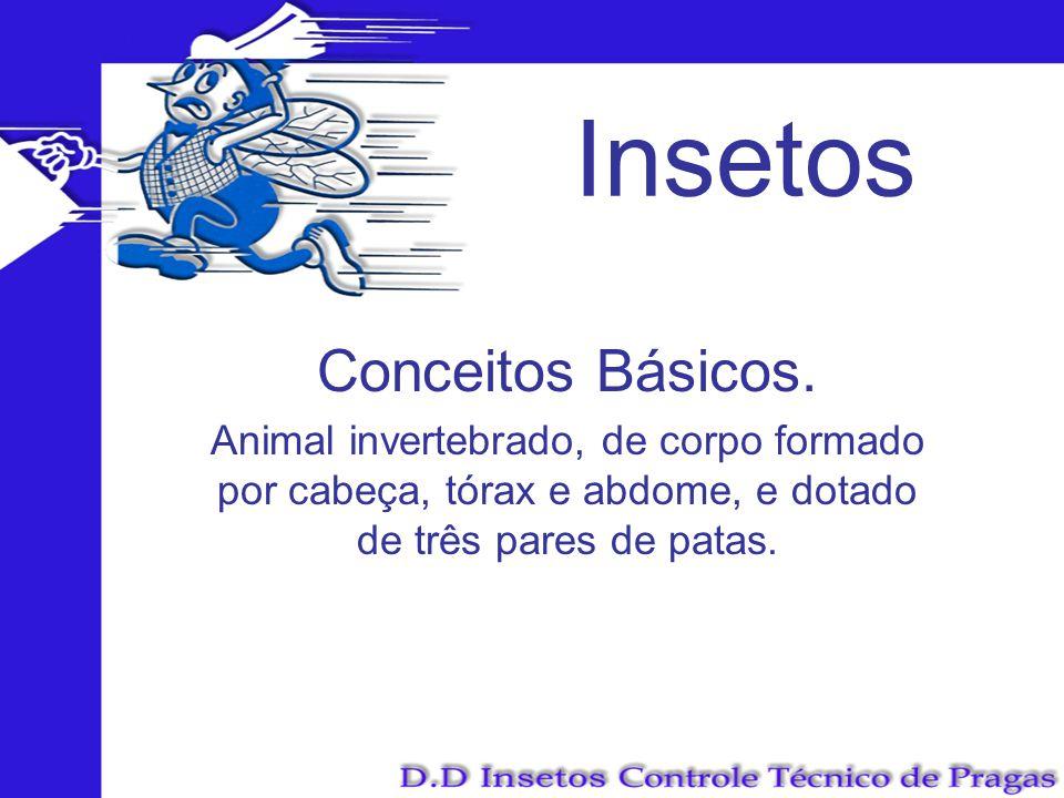 Insetos Conceitos Básicos. Animal invertebrado, de corpo formado por cabeça, tórax e abdome, e dotado de três pares de patas.